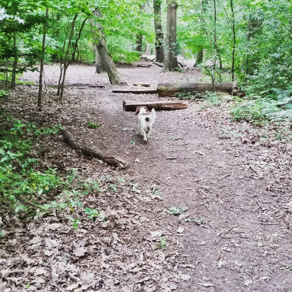 walking in Elmstead woods