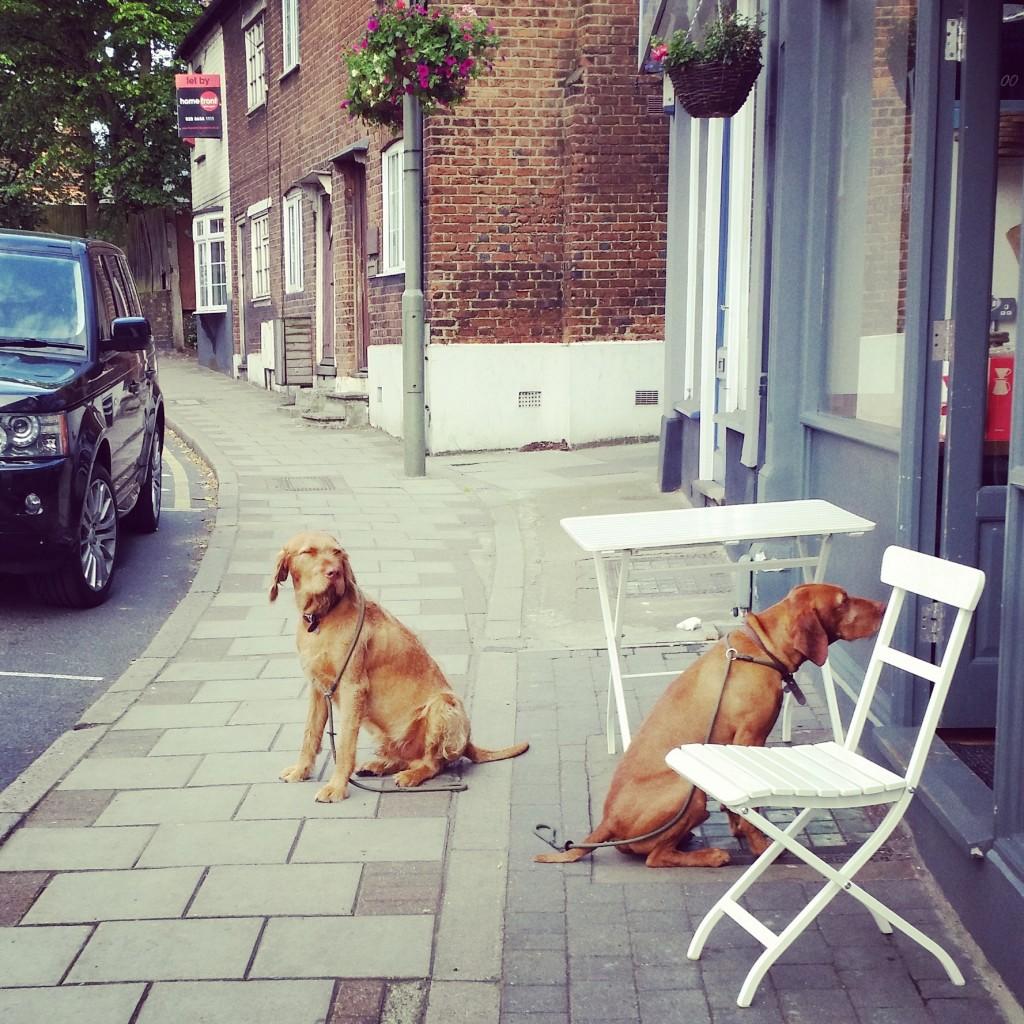 sundridgeparkdogs
