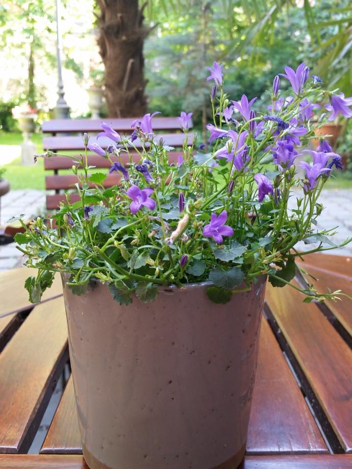 flowersinbudapest