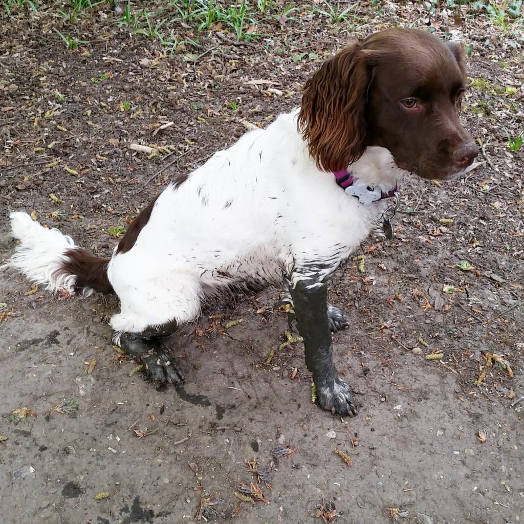 Muddy Maddie