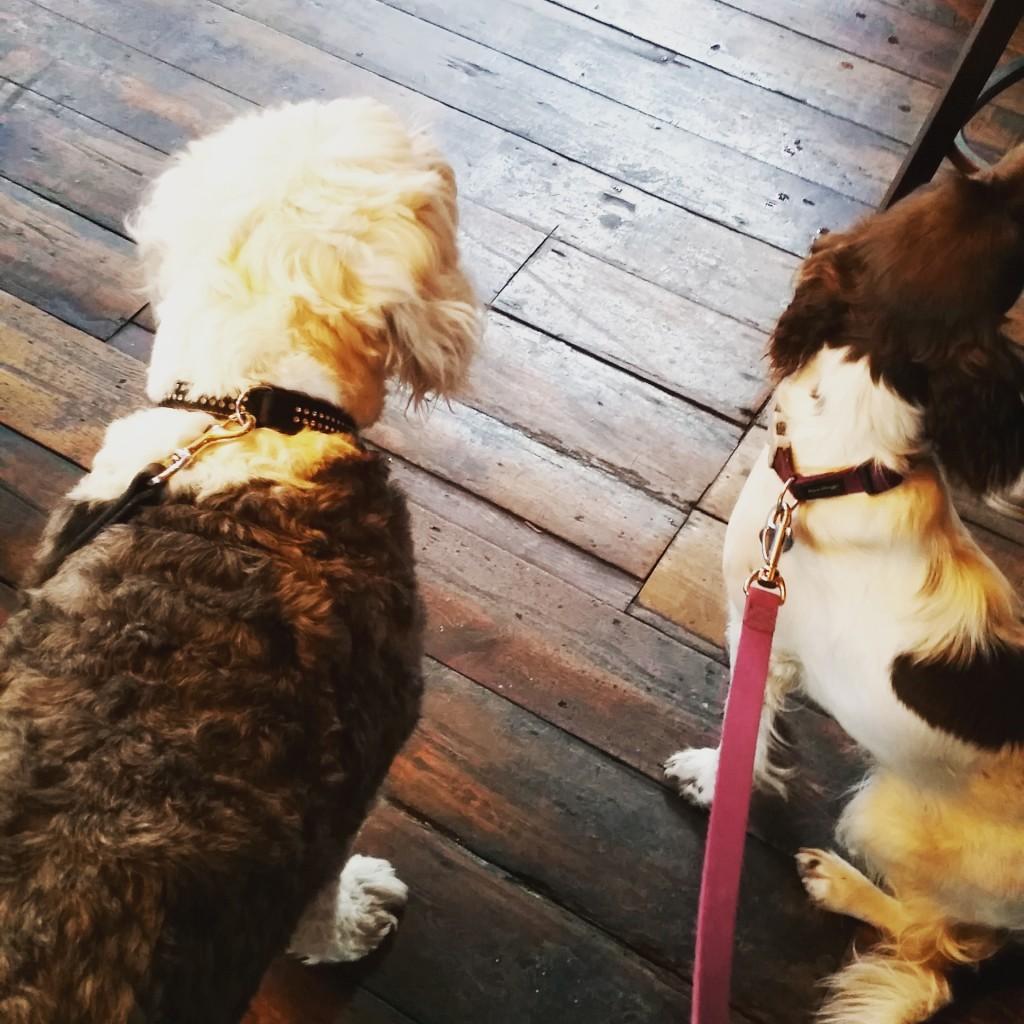 Maddie and Bonnie