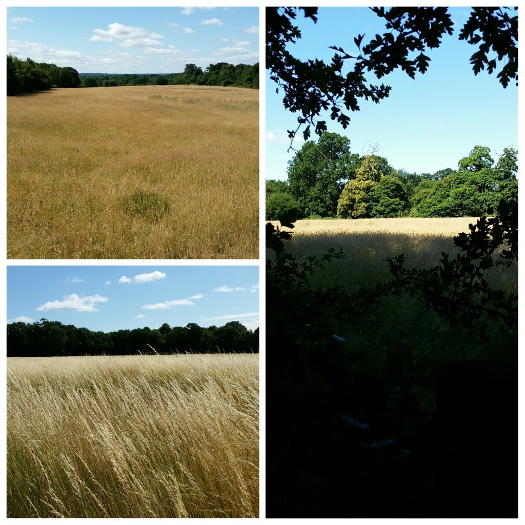 Chislehurst vistas