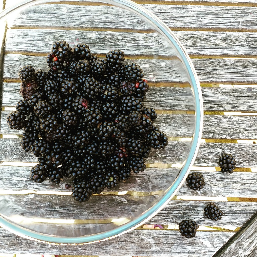 Last blackberry harvest