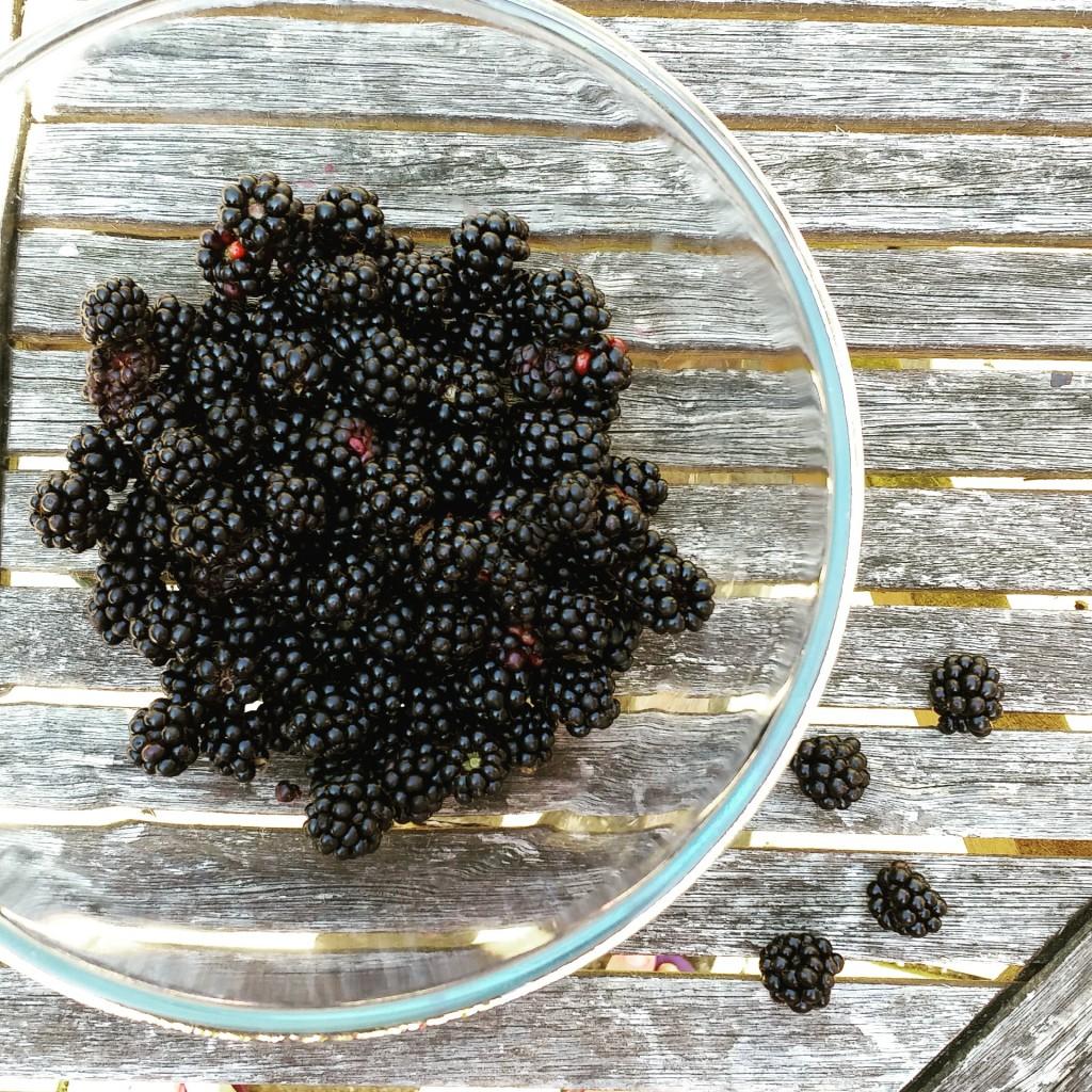 Last blackberry harvest