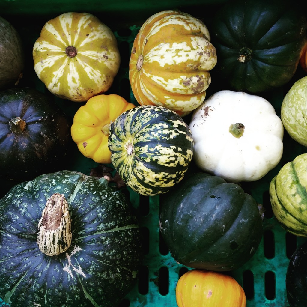 Seasonal squashes