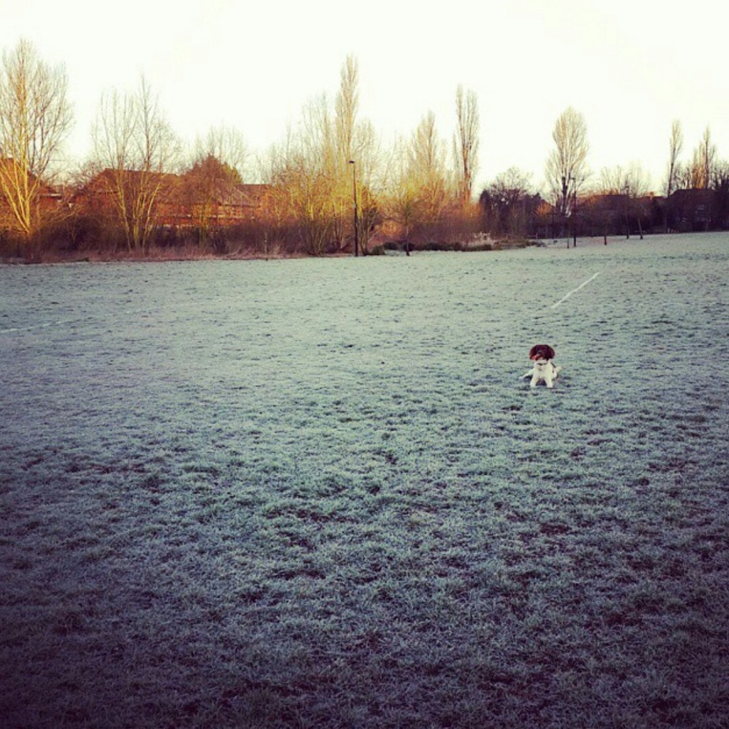 frosty walks