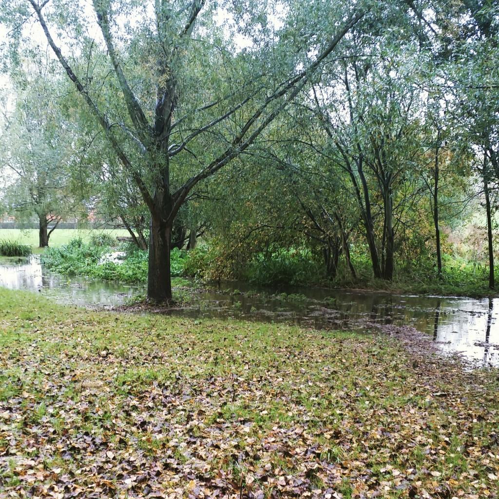 flooded chinbrook meadows