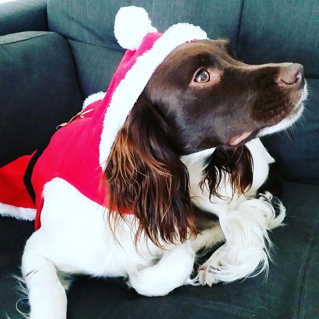 Maddie Santa