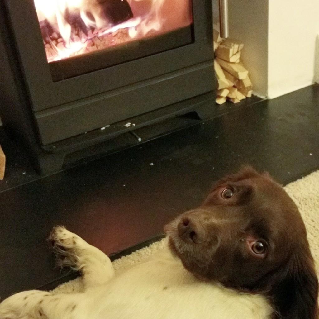 cosy dog