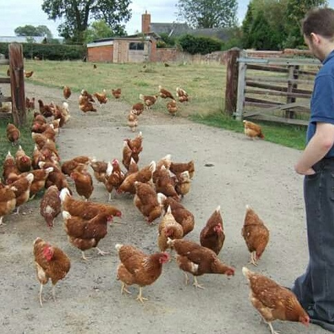 chickensin2011