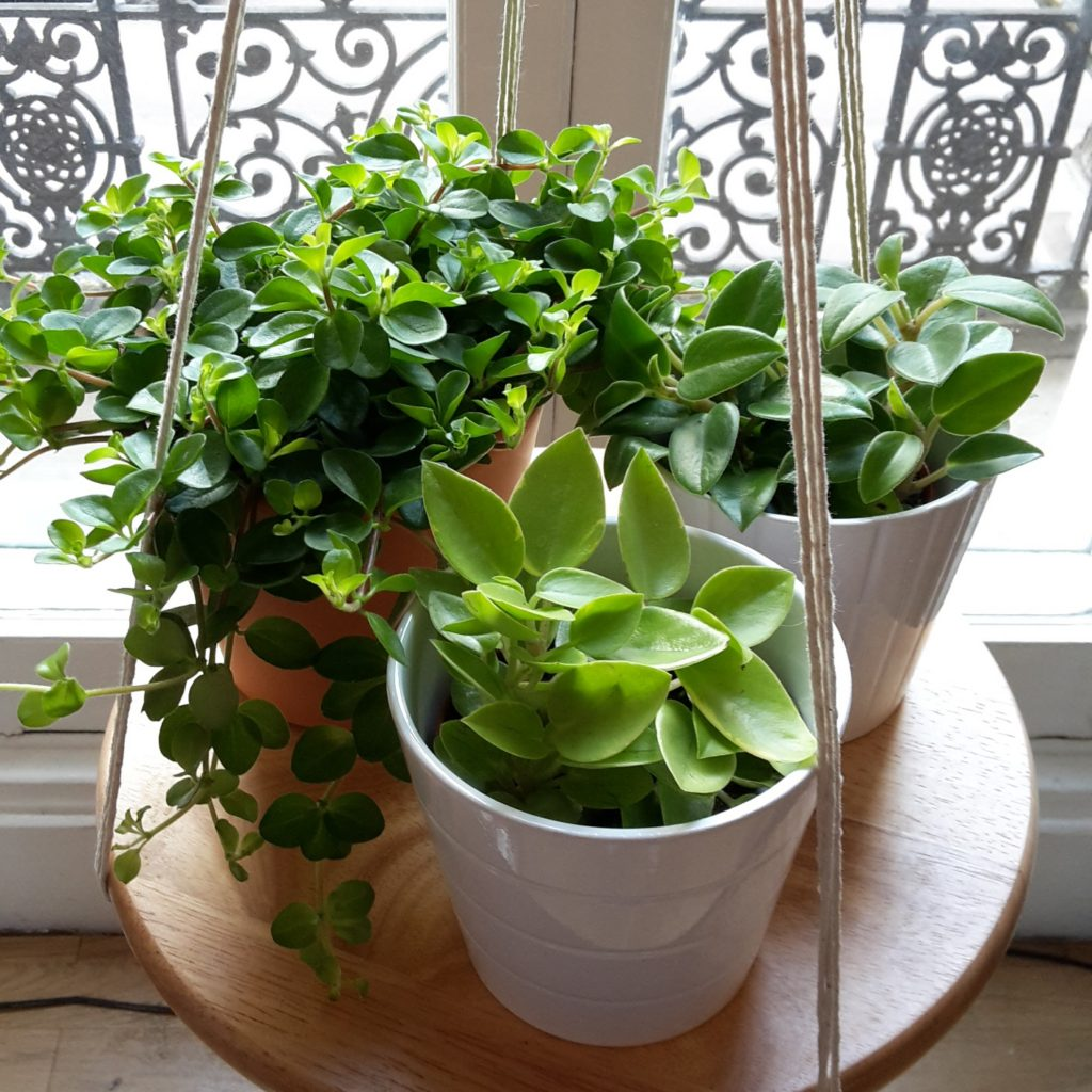 hangingplanter