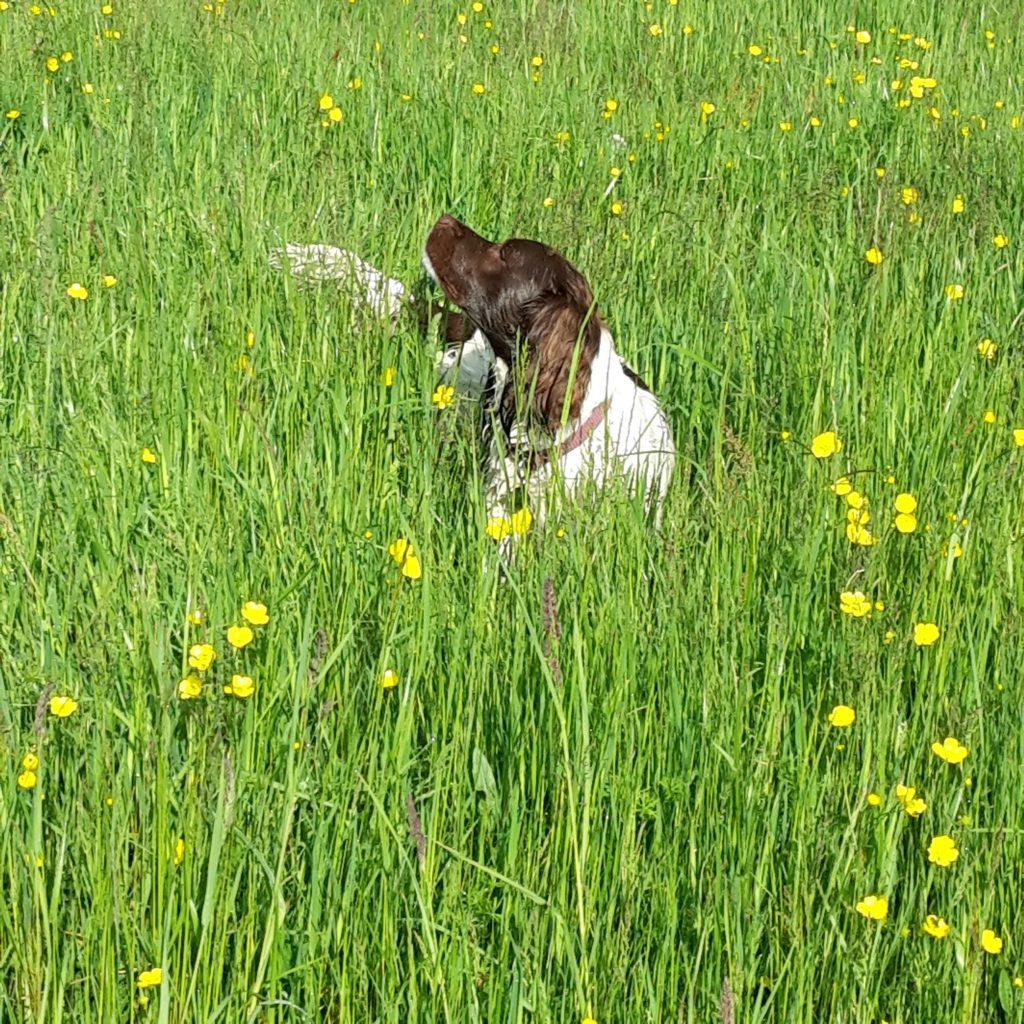 meadowplay