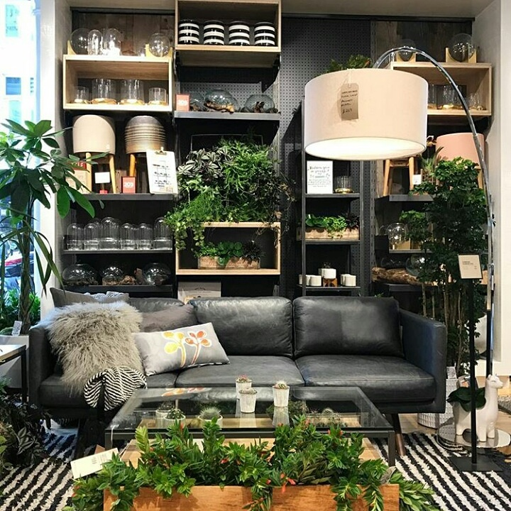 The Joy Of Plants At West Elm