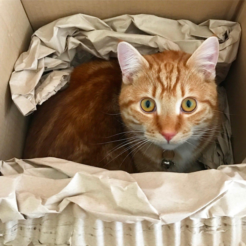 Boo In A Box