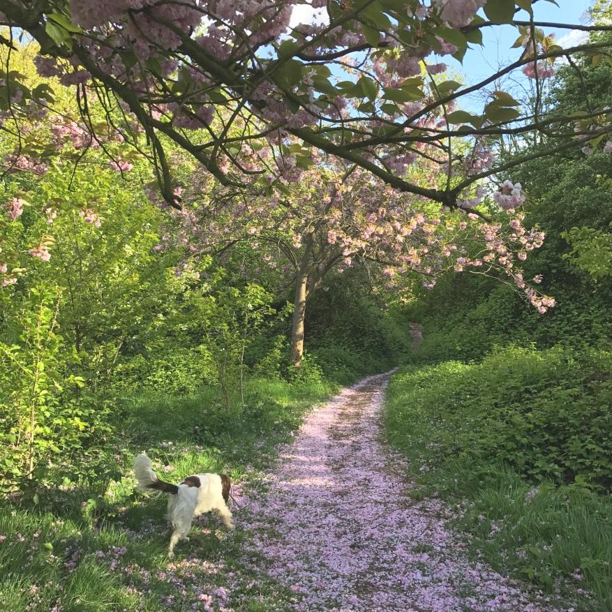 Elmstead Woods blossom