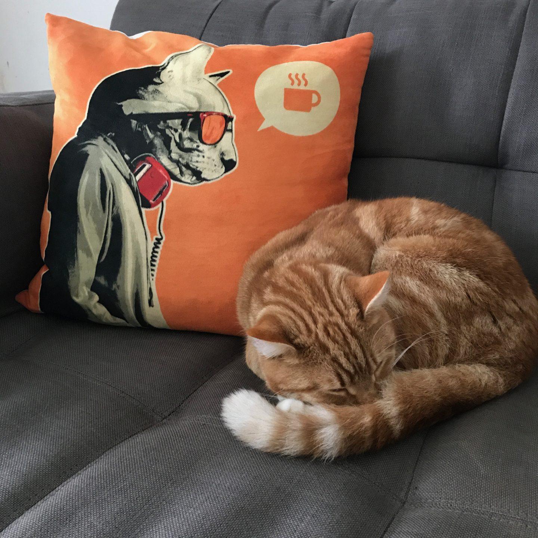My Sunday Photo - Ginger Cats Unite
