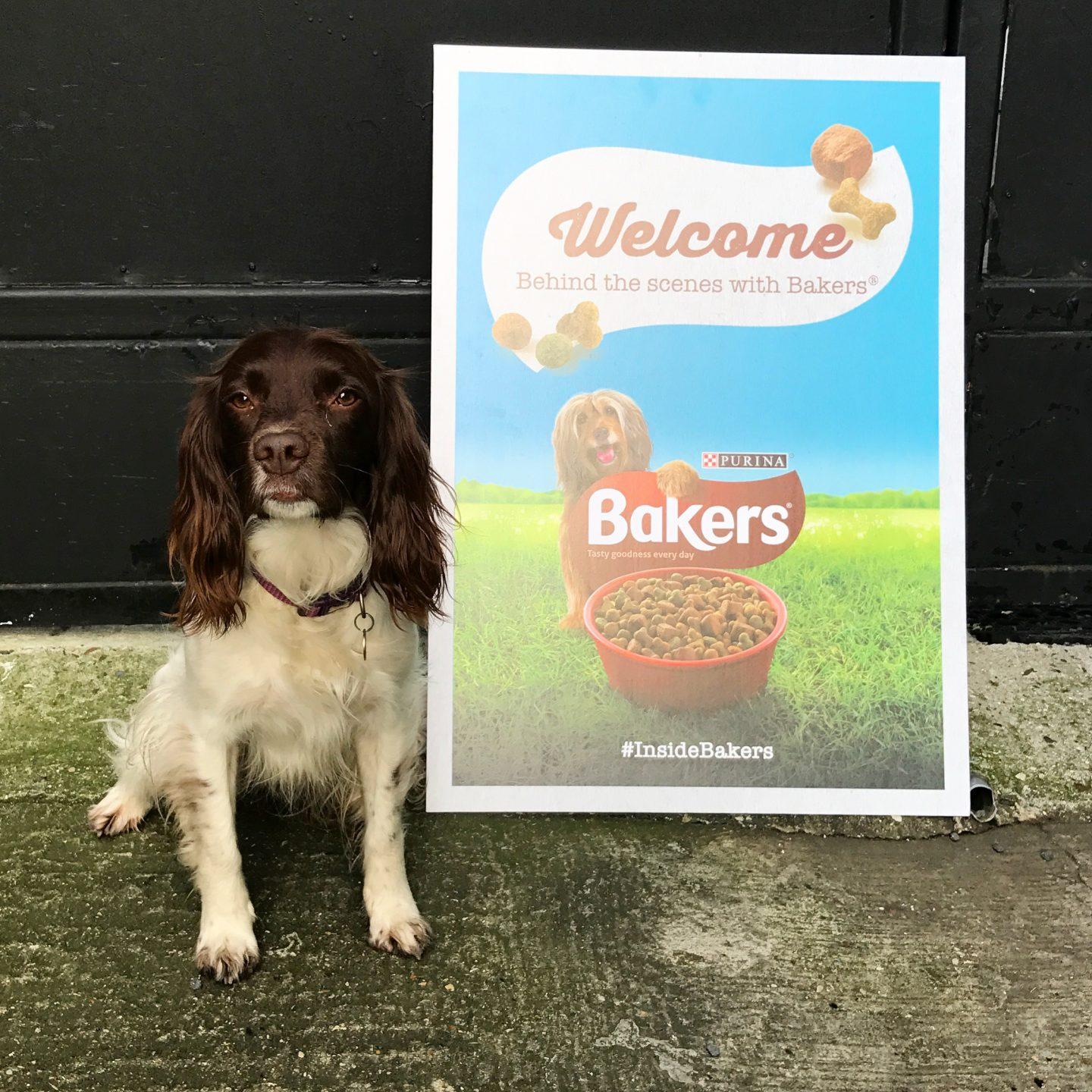 Bakers Dog Food Day Out