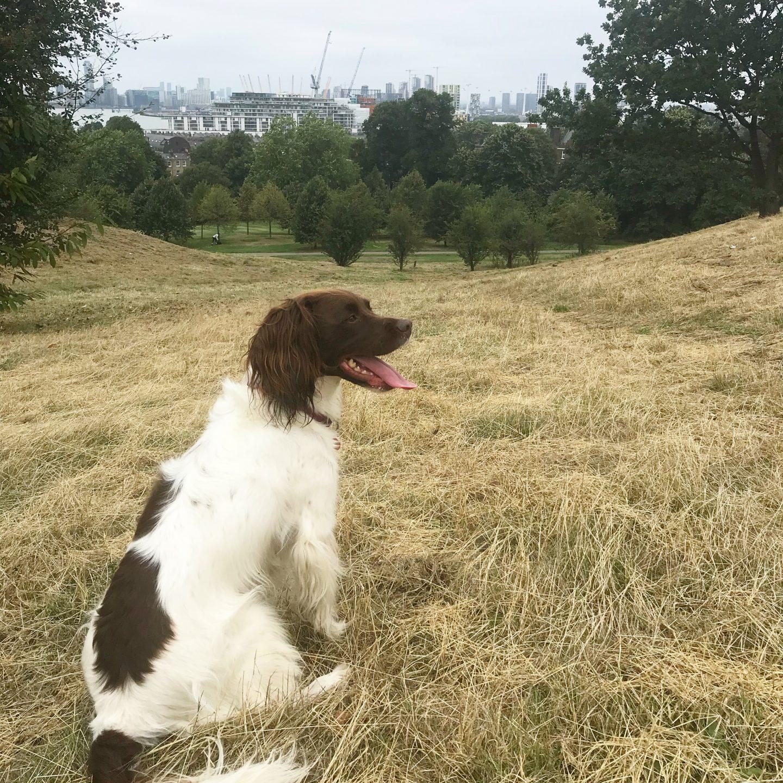 Maddie in Greenwich