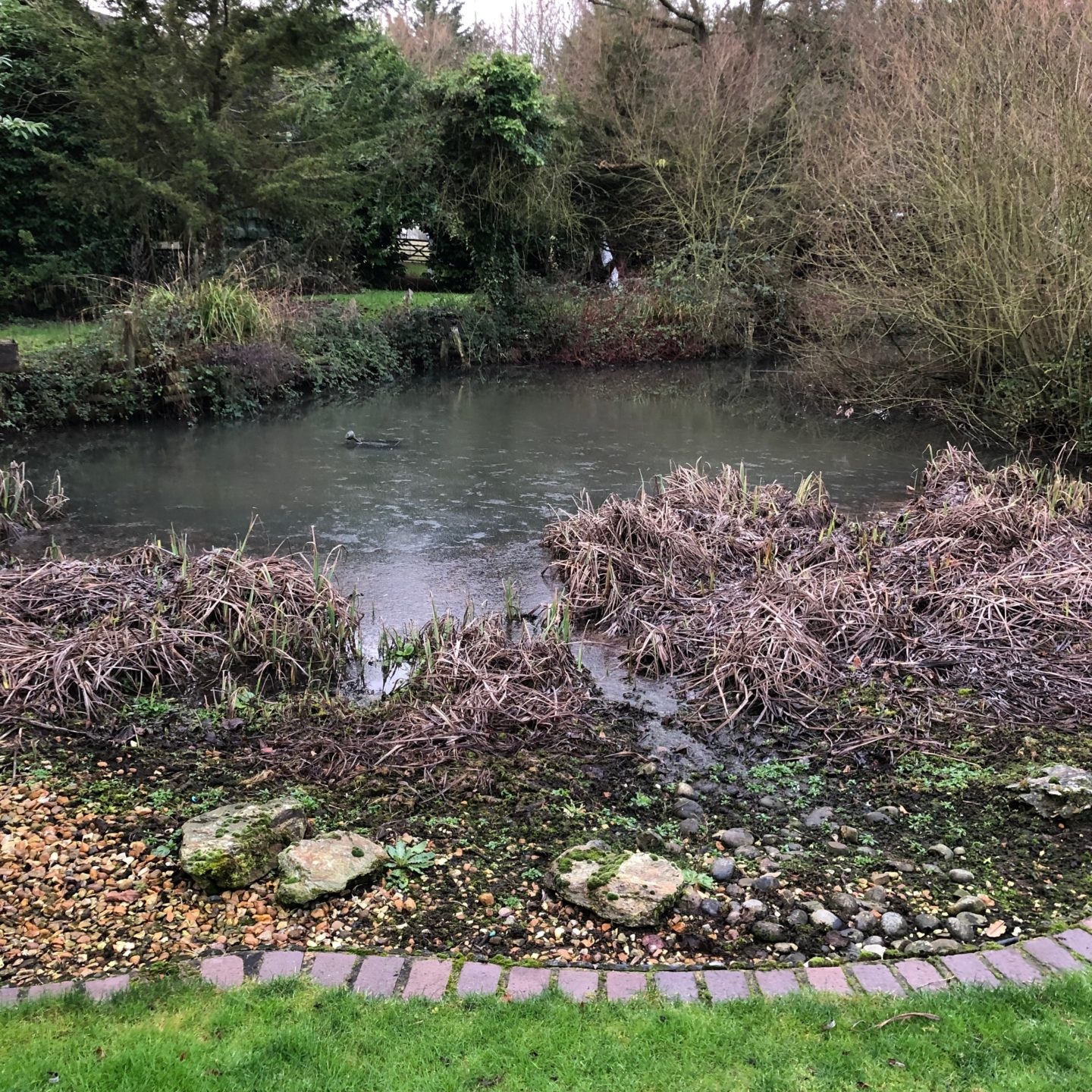Duckpond at Body And Mind Reboot