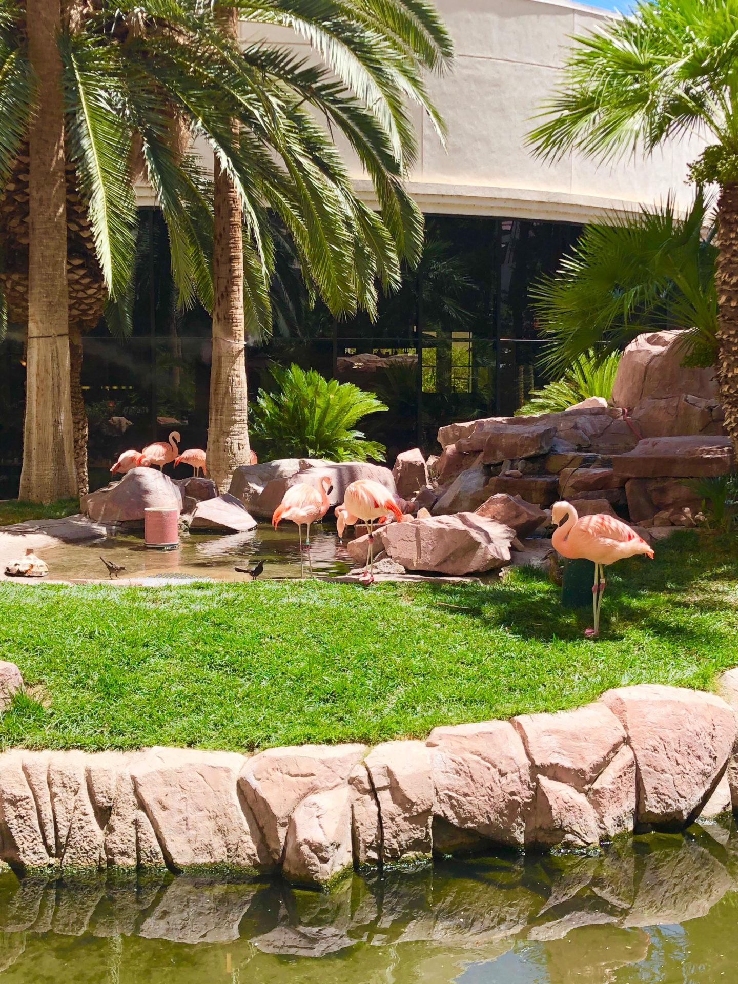 Flamingo Habitat Las Vegas
